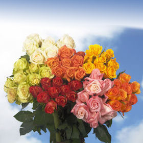 But Its Free - 50 Color Roses Marvelously Pretty!