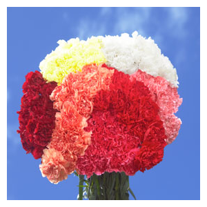 But Its Free - 100 Assorted Colors of Carnations