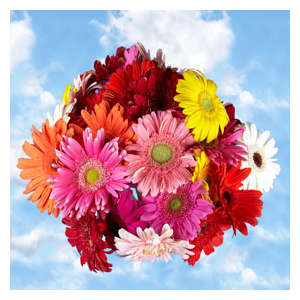 But Its Free - 60 Assorted Colors of Gerberas Flowers